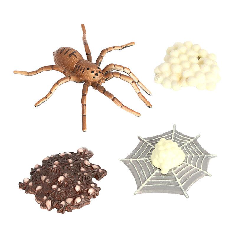 العنكبوت دورة الحياة الحشرات العلوم الفصول الدراسية تعلم ألعاب تعليمية جمع
